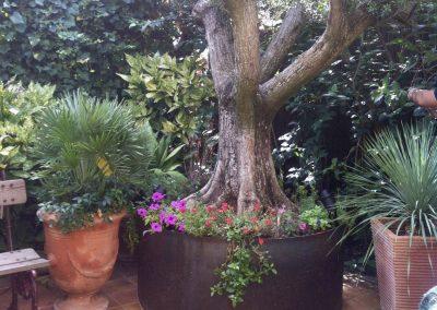 pot pour olivier en acier rouillé